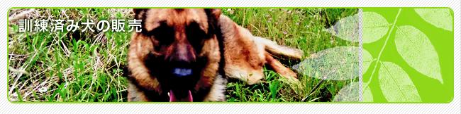 訓練済みの犬の販売
