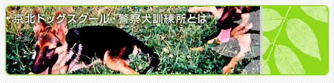 京北ドッグスクール・警察犬訓練所とは